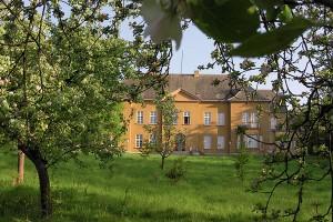 Tollense-Schloss-Apfelbluet