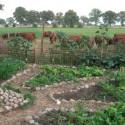 Garten-Kuehe