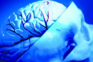 Gehirn für alle. Foto: Ars Electronica Center