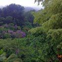 rainforest-brasil