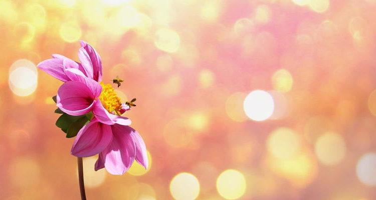 claudia-shkatov-flower-1669899_1280-pixabay
