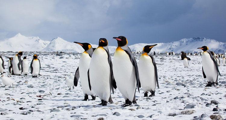 antarktis-meeresschutzzone