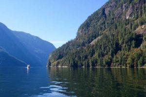 Crowdfunding rettet 800 Hektar Wald