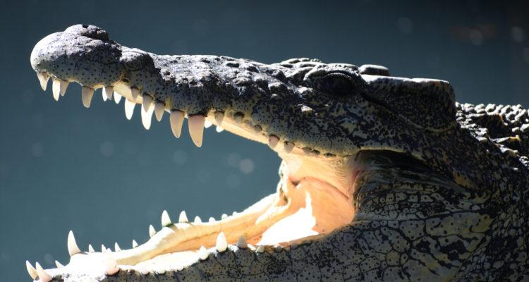 Krokodil-Prozess