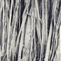 abdi-trees