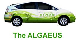 algaeus