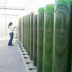 Kraftstoff aus Algen