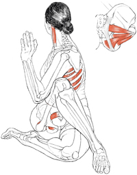 anatomie_drehsitz
