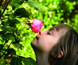 aroma-ele____onoreh-fotolia