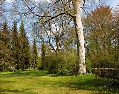 Baum mit Drehwuchs an einem Kraftort