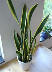 Perfekt Zimmerpflanzen Als Luftfilter Und Klimaanlage | Sein.de, Schlafzimmer.  Natürlich | Pflanzen Fürs Schlafzimmer, Schlafzimmer