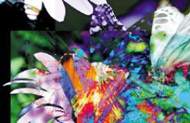butterfly5NEU.jpg