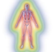 menschliche anatomie mit nieren