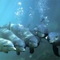 delfin-gruppe