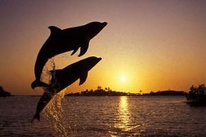 delfine1