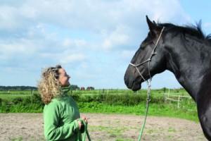 drge-achtsamkeit_pferd