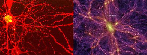 Gehirn und Universum