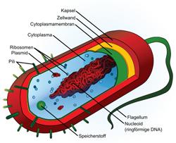 Prokaryoten Zellen
