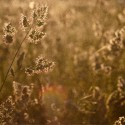 psychosomatik-allergie