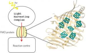 quanten-photosynthese