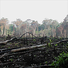 regenwald-rodung