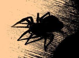 spinnen1