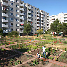 stadtgarten-hannover2