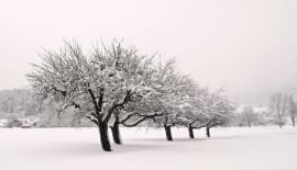 wintertraum_odertraum_72