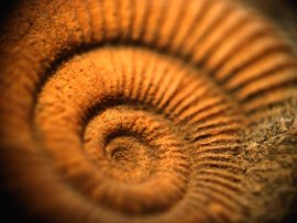 zahohie-spirale